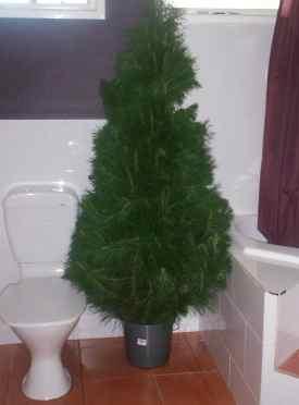 toilet-tree.jpg